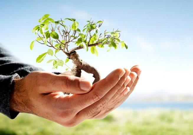 mano e albero